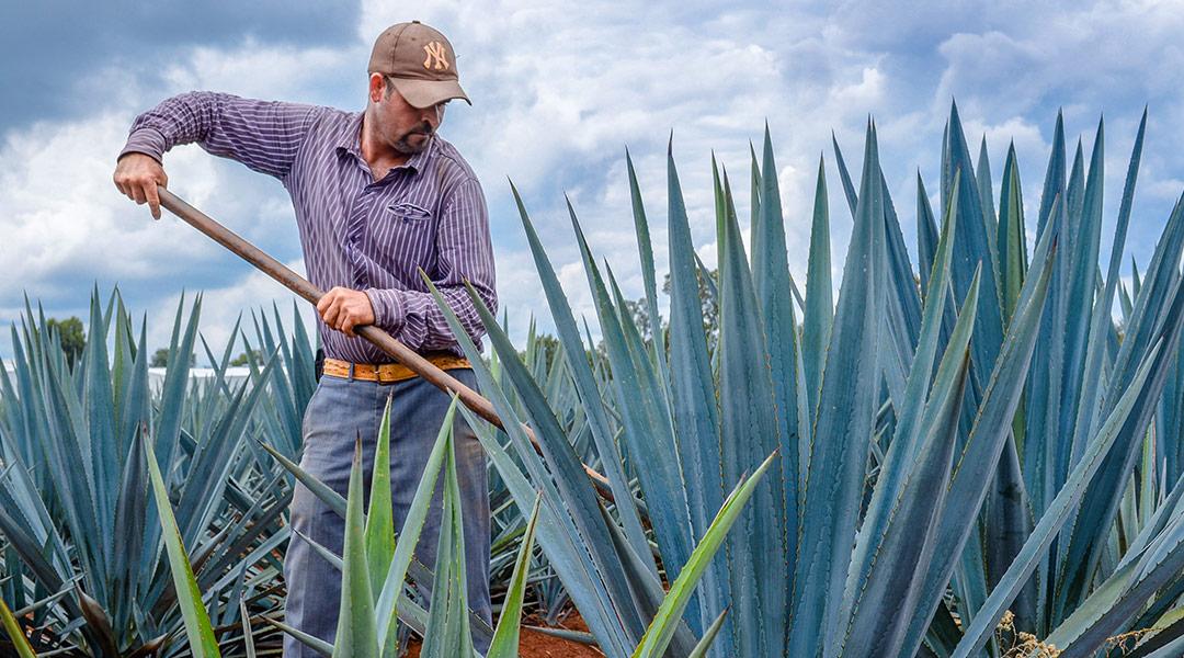 El Tequila: historia y tradición de México